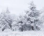 885-snieg-szron-drzewa